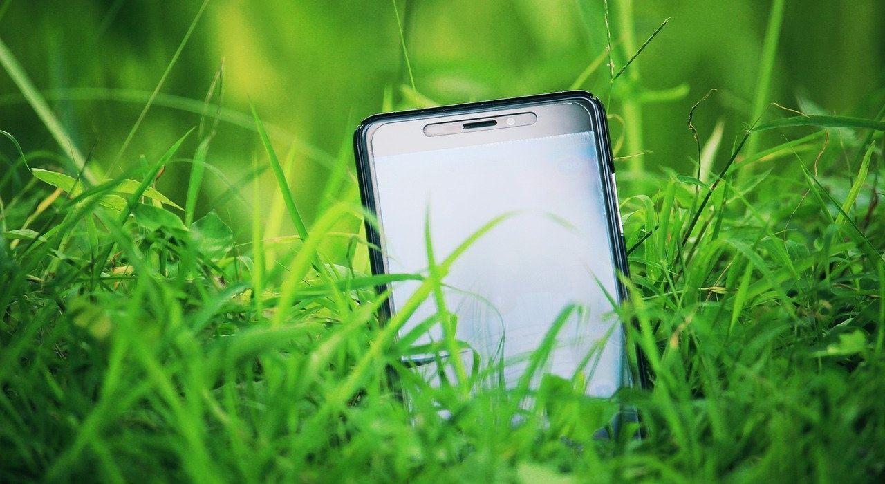 grass-5772141_1280.jpg